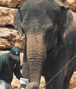 Elephants for the Negev park will come from the Far East.