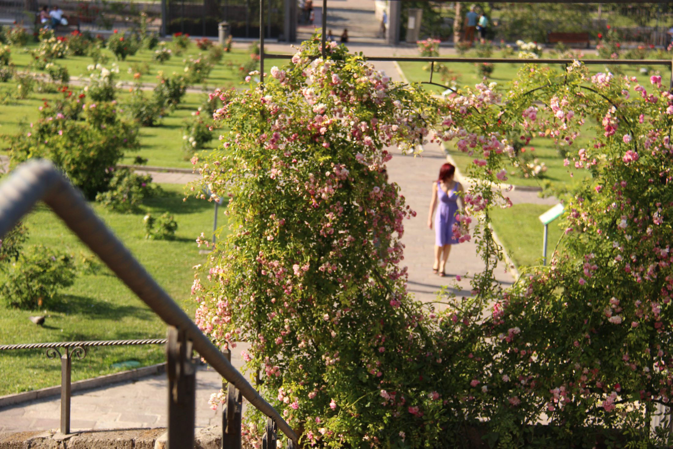 Sub rosa: a Rome garden with a secret Jewish past - Jewish World ...