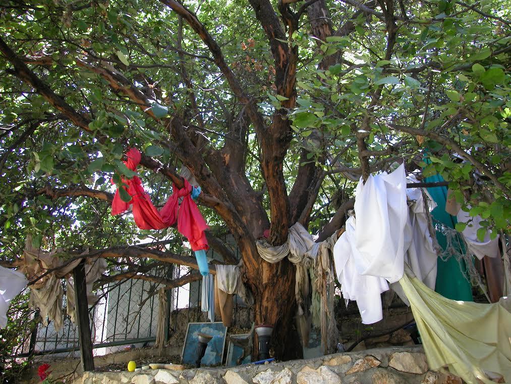 Soulful Tree Ancestors Archetypesby Iona Miller